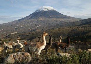 Reserva de Vicuñas Arequipa