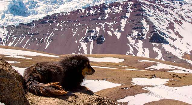 vinicunca-nevado-canino