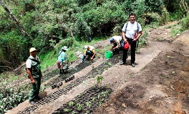 reforestacion-machu-picchu
