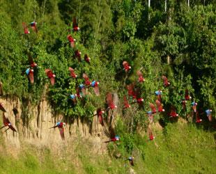 Vista de Guacamayos