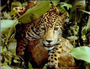 Fauna Silvestre de la Selva Amazonica