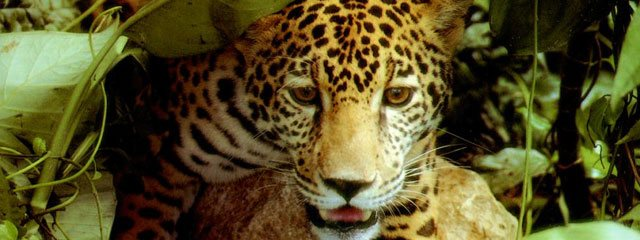 Fauna Silvestre de la Selva Peruana