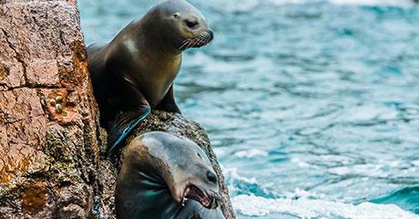 Islas Ballestas y Reserva de Paracas
